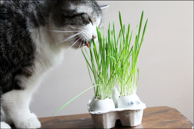 ed eating cat grass