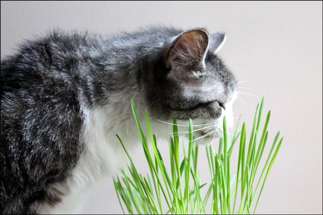 eddie with grass