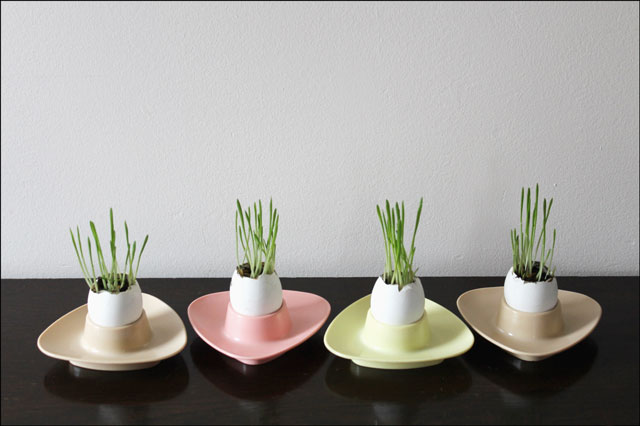 egg shell planters in melma