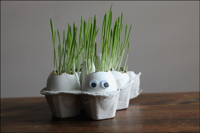 eggshells with grass growing