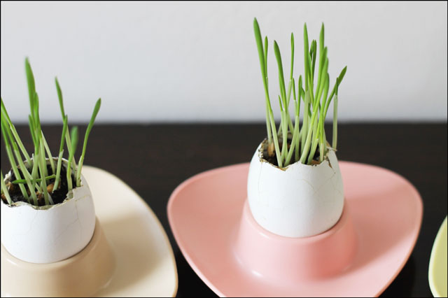 grass growing in egg shells