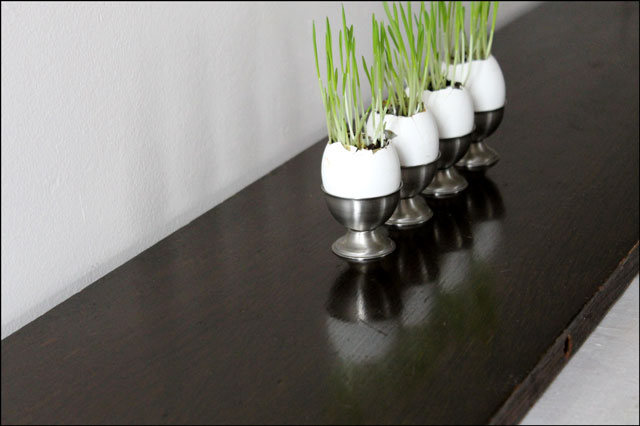 grass grown in eggshells