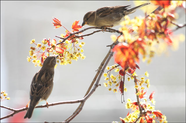 2-sparrows-feeding-01