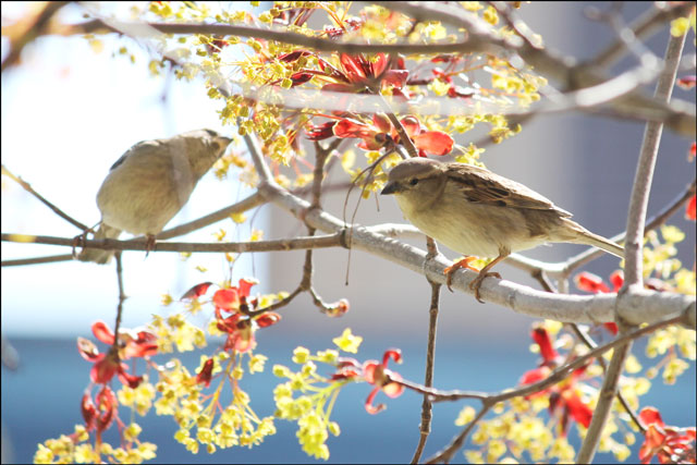 2-sparrows-feeding-02