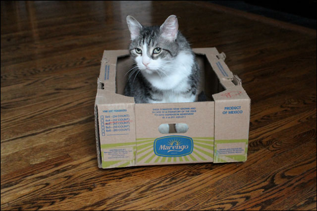 eddie-in-tomato-box-03