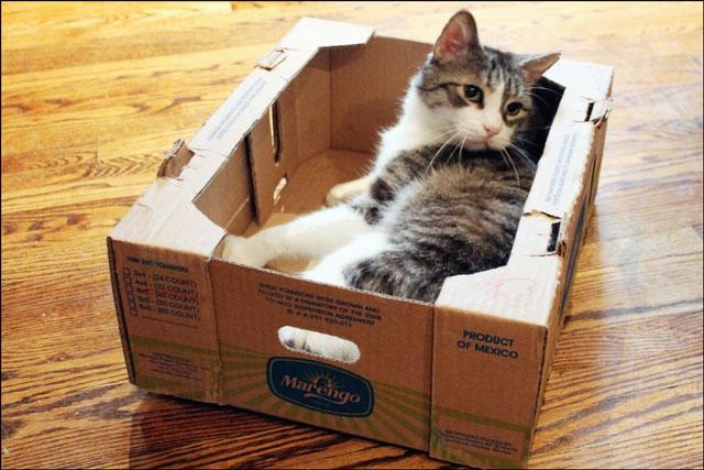 eddie-in-tomato-box-08