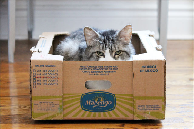 eddie-in-tomato-box-09