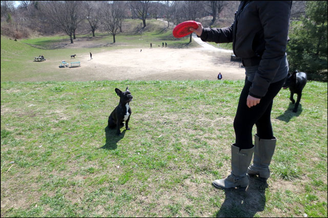 little-dog-in-the-park-3