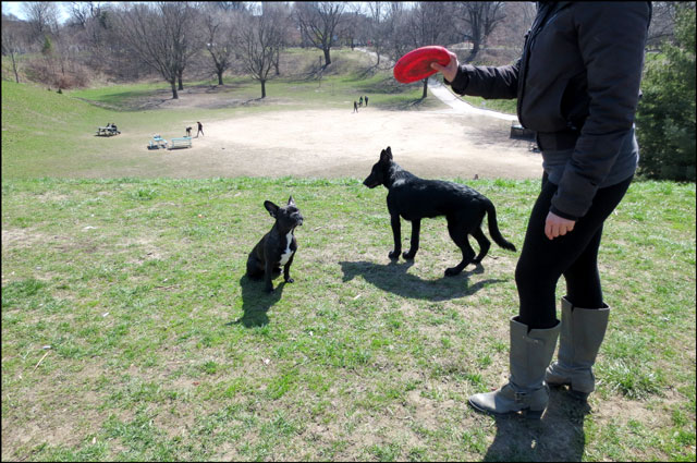little-dog-in-the-park-4