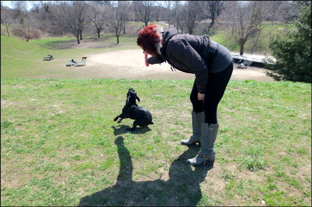 little-dog-in-the-park-5
