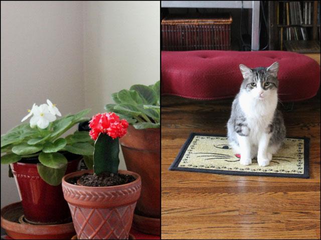 plants-and-eddie