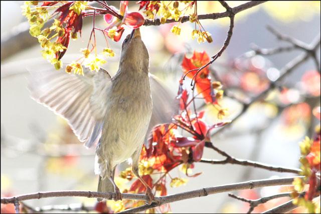 sparrow feeding 02