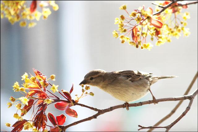 sparrow feeding 03