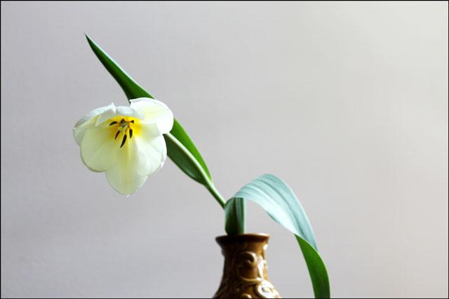 tulip-in-vase-04
