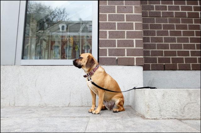 waiting-puppy-01