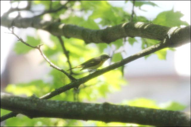 small-bird-2
