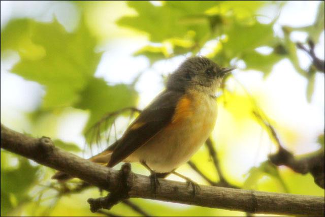 small-bird-in-toronto-2013