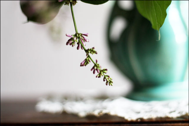 sprig-of-lilac