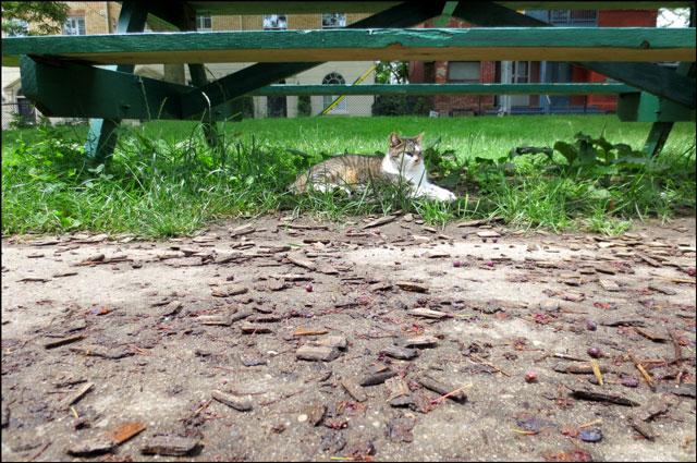 cat-in-the-park-01