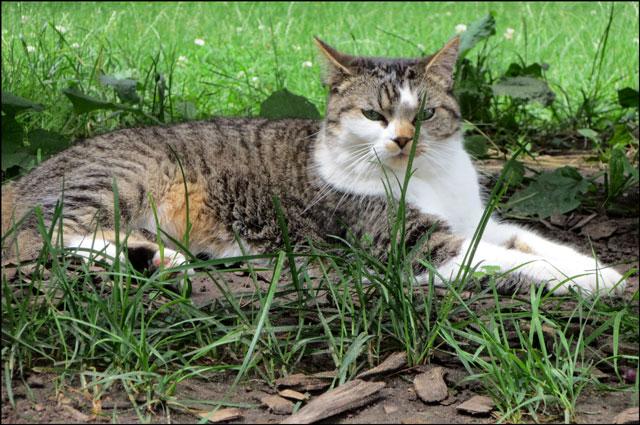 cat-in-the-park-02