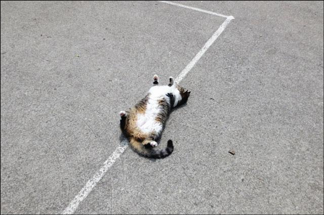 cat-in-the-park-08