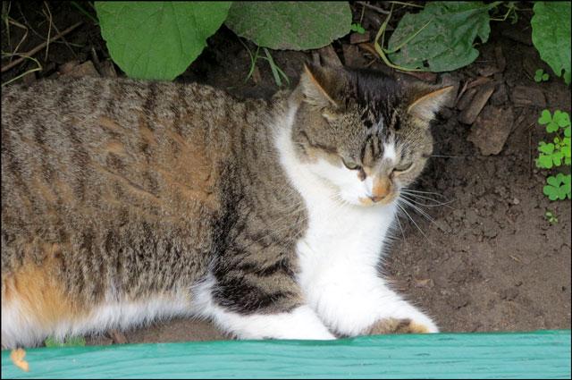 cat-in-the-park-12
