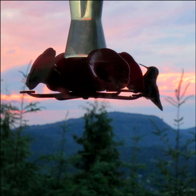 hummingbird-at-feeder-2