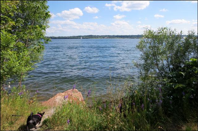 kiki-on-waters-edge
