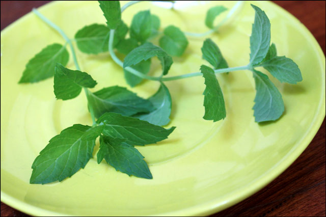 mint-for-mojitos