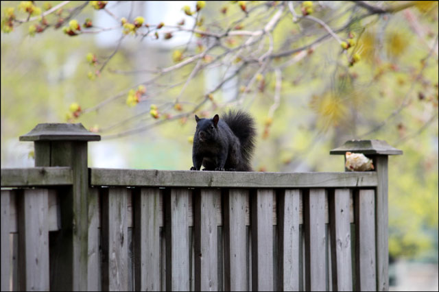 squirrel-with-apple-07