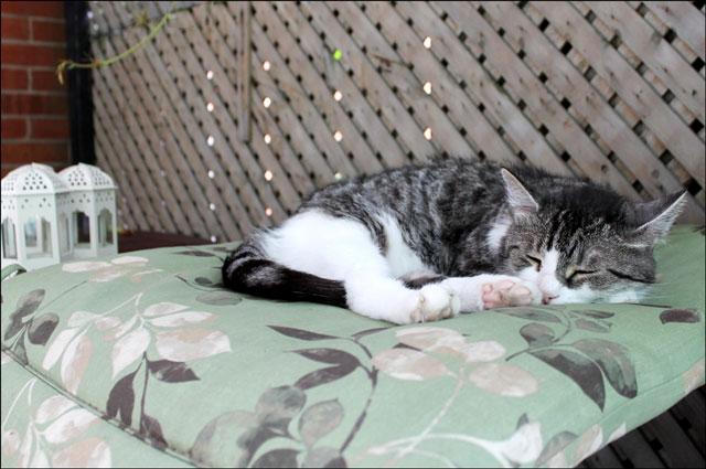 ed-sleeping-floral-mat
