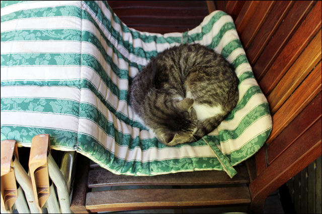 ed-sleeping-green-mat