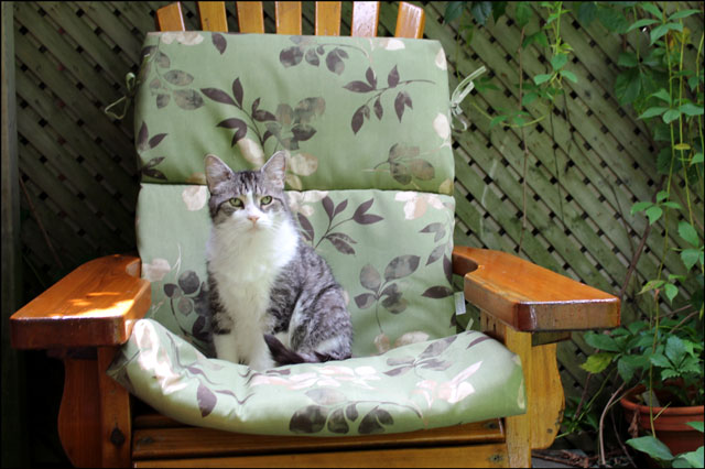 eddie-on-outdoor-chair