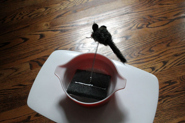 cat-toy-in-water-bowl