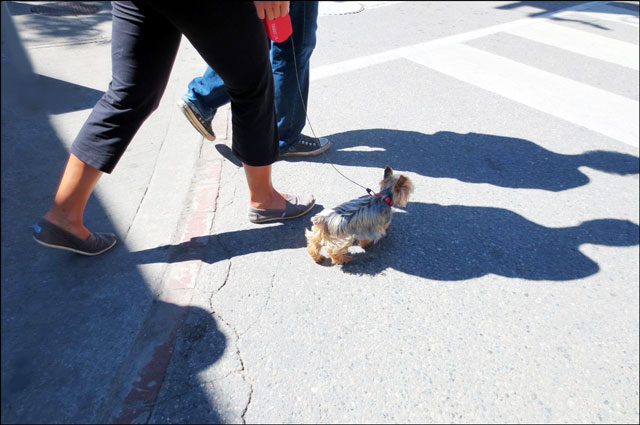 small-dog-crossing-street