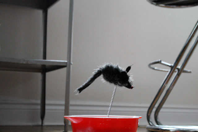 toy-cat-mouse-in-water-bowl