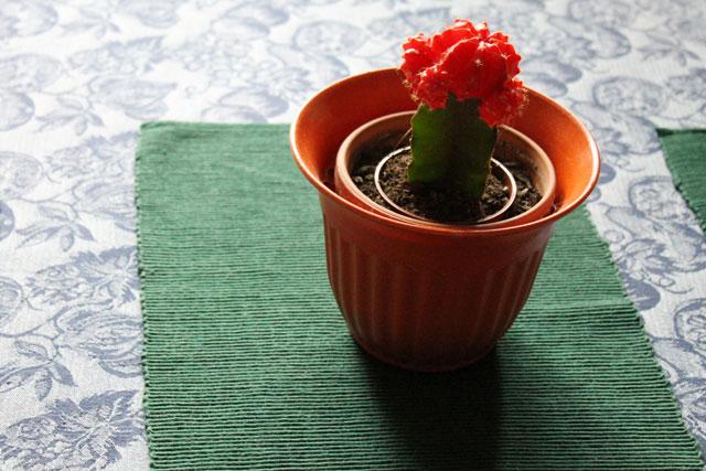cactus-in-orange-pot