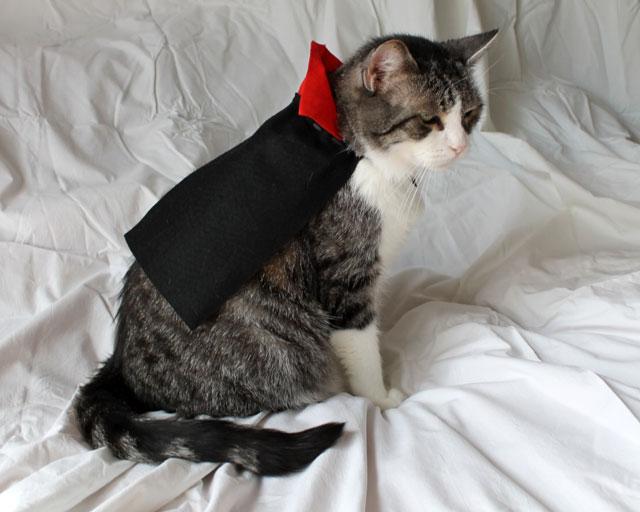 cat-in-a-cape