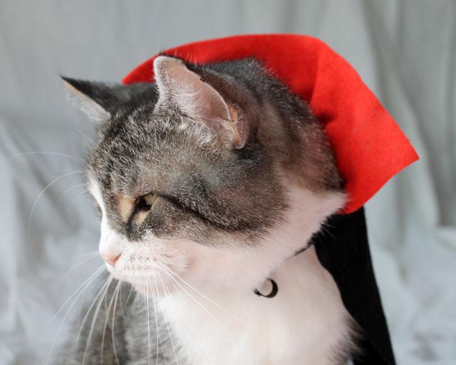 cat-in-a-costume-dracula