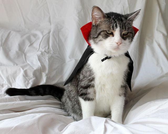 cat-in-costume-dracula-01