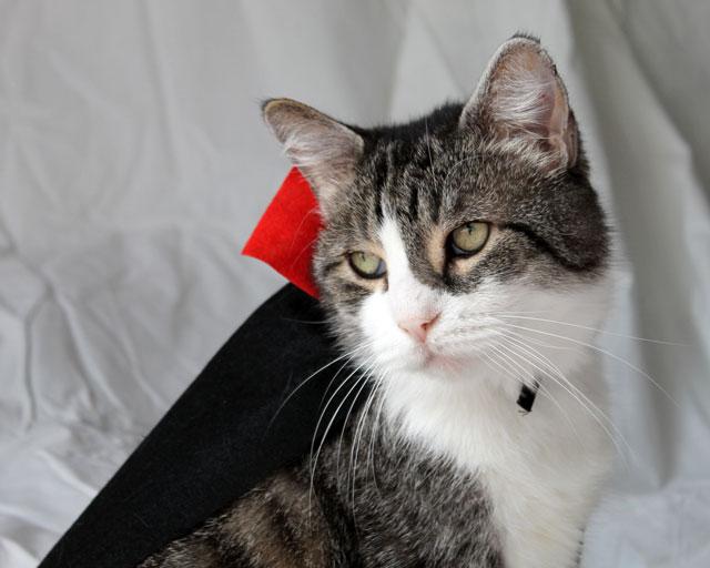 cat-in-dracula-costume-01