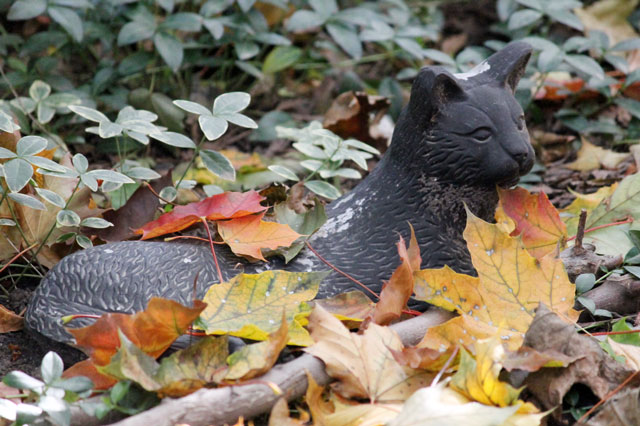 cat-statue-fall-leaves