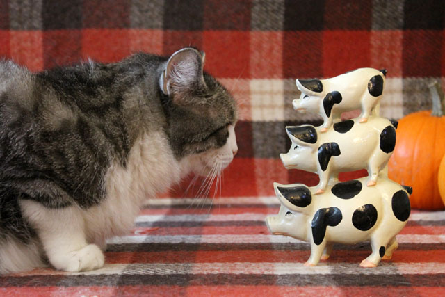 cat-with-pigs-statue