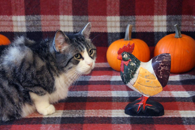 cat-with-wooden-chicken