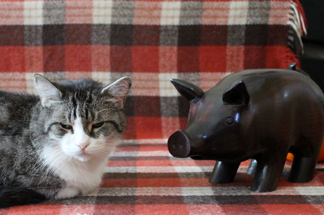 cat-with-wooden-pig-2