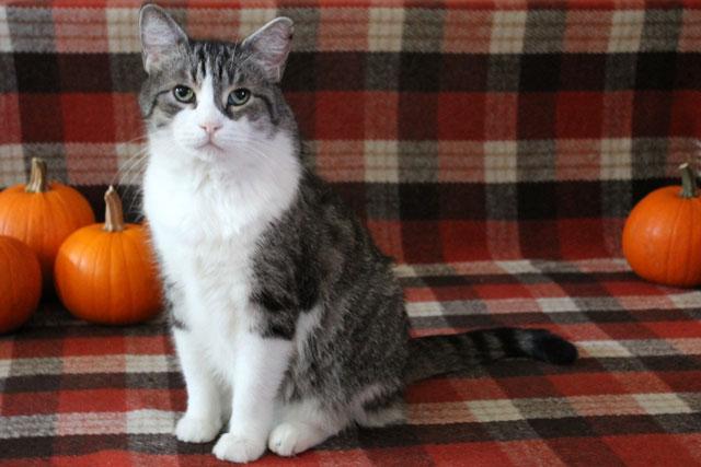 ed-cat-autumn-theme