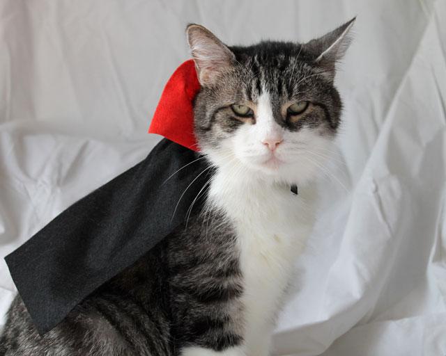 eddie-halloween-cat