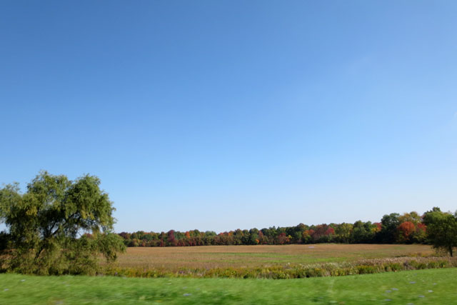 fall-colours-across-a-field