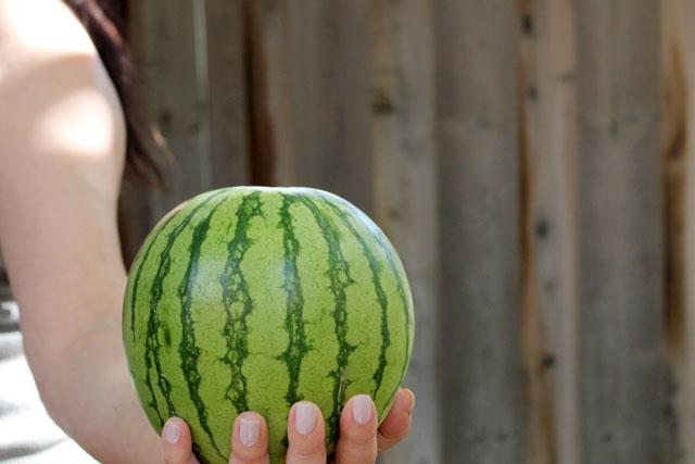 mini-little-bear-watermelon-2