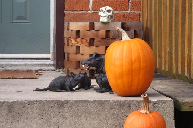 pumpkins-and-rats-halloween-decor